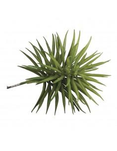 """Succulent """"Senecio"""" - 10 x..."""