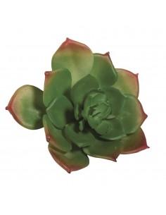 """Succulent """"Echeveria"""" - 8.5..."""