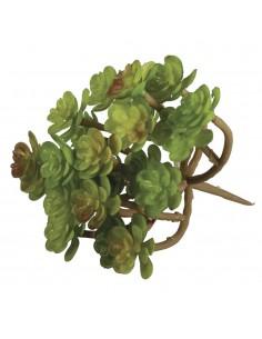 """Succulent """"Sedum"""" - 9.5 x 8 cm"""