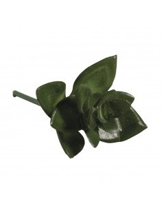 """Mini-Succulent """"Haworthia""""..."""
