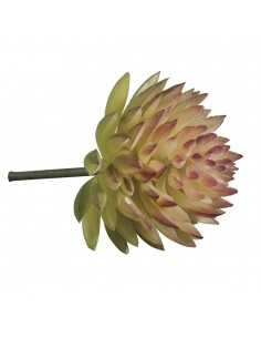 """Mini-Succulent """"Echeveria""""..."""