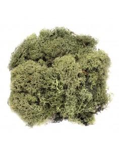"""Mousse """"Vert Foncé"""" - 50 gr"""
