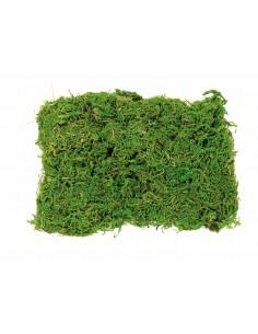 "Sachet de Mousse ""Vert"" -..."
