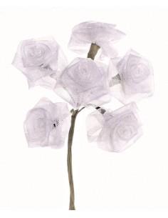"Roses Dior 6 Fleurs ""Blanc""..."