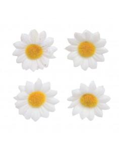 Fleurs de marguerites - Ø 2 cm
