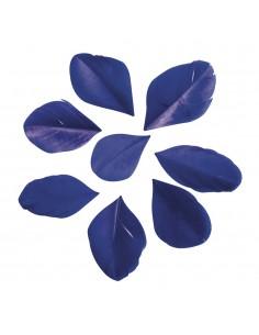 "Plumes Coupées ""Bleu Royal""..."