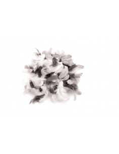"""Plumes """"Blanc-Noir-Gris"""" -..."""